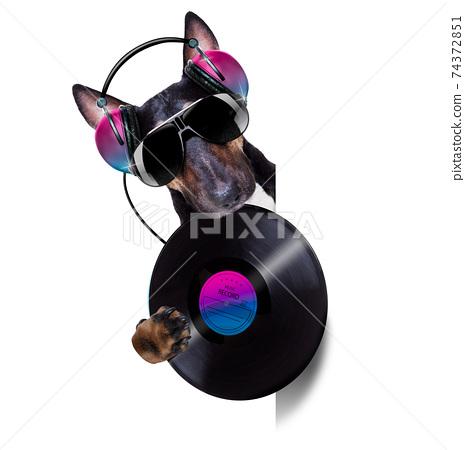 dj disco dancing music dog 74372851
