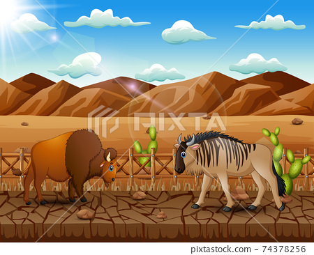 Cartoon a bison and wildebeest in the dry land landscape 74378256