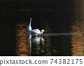 白鷺 飛翔 74382175
