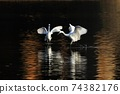 白鷺 飛翔 74382176