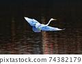 白鷺 飛翔 74382179