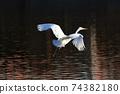白鷺 飛翔 74382180