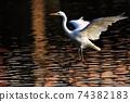 白鷺 飛翔 74382183