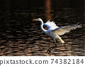 白鷺 飛翔 74382184