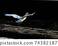 白鷺 飛翔 74382187