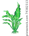 seaweed 74382313