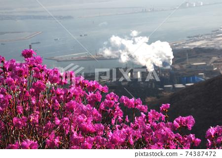 여수시.영춰산.진달래꽃.봄.일출 74387472