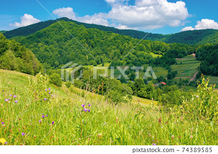 rural landscape of ukrainian carpathians. beautiful summer scenery in mountains. green grassy meadow by the forest on the hill. mountain peak beneath a sky with fluffy clouds on a sunny day 74389585