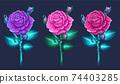 Blossom roses set. Floral design concept. Vector 74403285