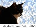 아침 응. 창가의 고양이. 창 필름 너머의 빛. 실루엣. 고양이 이미지 소재 74409065