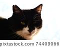 아침 응. 창 필름 너머의 빛. 고양이 이미지 소재 74409066