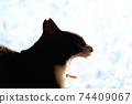 아침 응. 하품. 창 필름 너머의 빛. 고양이 이미지 소재 74409067