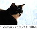 아침 응. 창 필름 너머의 빛. 고양이 이미지 소재 74409068