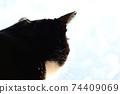 아침 응. 창 필름 너머의 빛. 고양이 이미지 소재 74409069