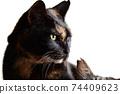 고양이 이미지 소재. 녹 고양이. 아침 햇살. 흰색 배경 74409623