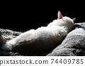 치유의 고양이. 낮잠. 한가로이 느긋 고령 고양이. . 고양이 이미지 소재 74409785