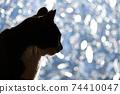 아침 응. 창가의 고양이. 창 필름 너머의 빛. 실루엣. 고양이 이미지 소재 74410047