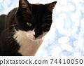 아침 응. 창가의 고양이. 창 필름 너머의 빛. 실루엣. 고양이 이미지 소재 74410050