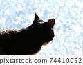 아침 응. 창가의 고양이. 창 필름 너머의 빛. 실루엣. 고양이 이미지 소재 74410052