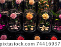Luxurious rose flower in glass for a perfect gift 74416937