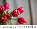 Red tulips in front of a window curtain at home 74416938