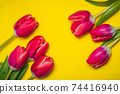 Red tulips on yellow background arrangement top view 74416940