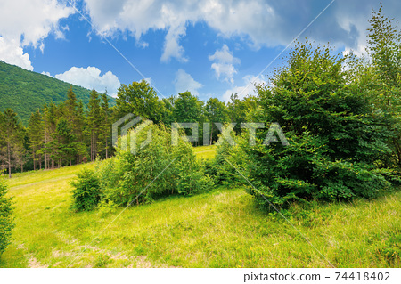 trees on the hill in summer scenery. beautiful mountain landscape on a cloudy day 74418402