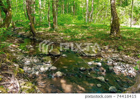 wild water stream in the forest. beautiful nature scenery on a sunny spring day. trees in vivid green foliage. stones on the shore. freshness of nature concept 74418415