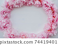 Beautiful fresh pink peony flowers in full bloom on white background. 74419401