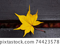 One piece of maple autumn leaves 74423578