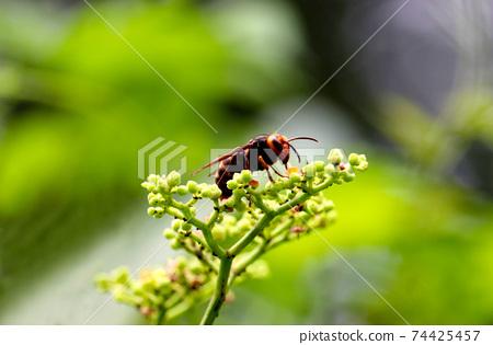 꽃에 앉는 말벌 74425457