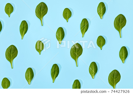 Spinach leaf isolated on soft blue background. 74427926
