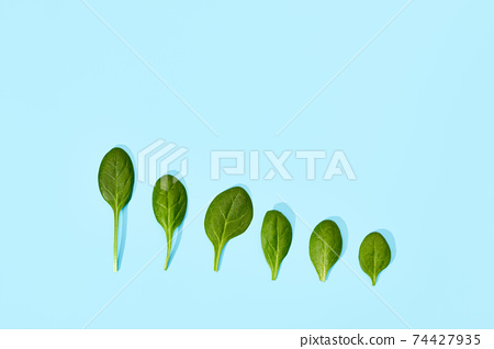 Spinach leaf isolated on soft blue background. 74427935