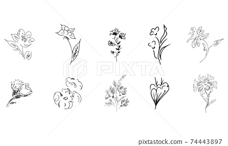 10 hand-drawn blossom wildflowers. Big collection of 10 hand-drawn roses. Big floral botanical set. Isolated on white background. Doodle simple vector collection. 74443897