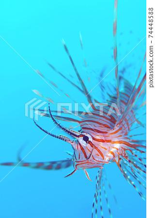 Hanturkey魚 74448588