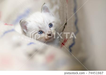 小貓的目光 74451987