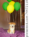 Happy akita inu puppy celebrate his adoption in new family 74472110