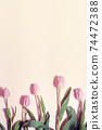 bouquet of tulips on pastel background 74472388