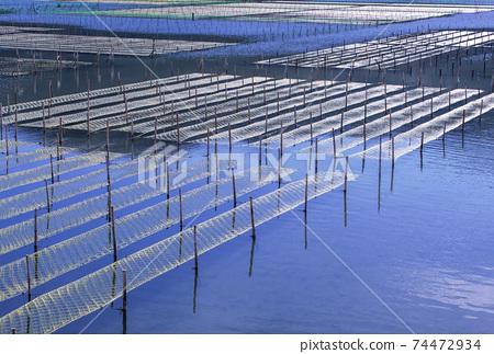 海生菜海藻養殖海生菜和海藻田野風光 74472934