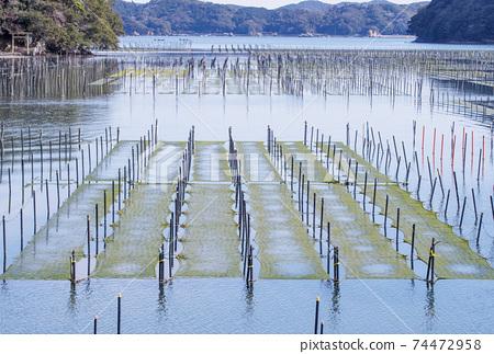 海生菜海藻養殖海生菜和海藻田野風光 74472958