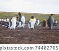 福克蘭群島企鵝王和企鵝國王希娜西洋鏡風格 74482705