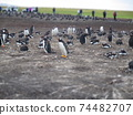 福克蘭群島巴布亞企鵝西洋鏡風格 74482707