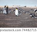 福克蘭群島企鵝王和巴布亞企鵝西洋鏡風格 74482715