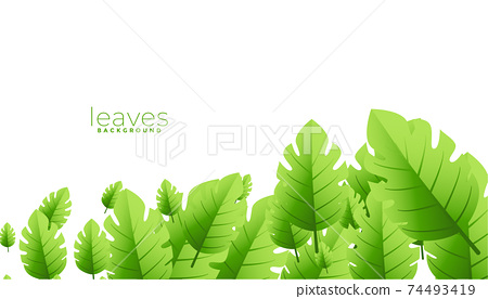 tropical exotic green leaves background design 74493419