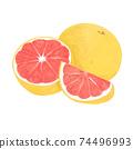彩色的鉛筆風格葡萄柚圖 74496993