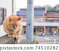 [Hiroshima Prefecture] A stray cat of a tea tiger sitting on a wall in an alley in Onomichi 74510282