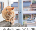 [Hiroshima Prefecture] A stray cat of a tea tiger sitting on a wall in an alley in Onomichi 74510284