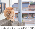 [Hiroshima Prefecture] A stray cat of a tea tiger sitting on a wall in an alley in Onomichi 74510285