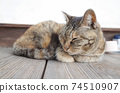 Stray cat of Kijitora sitting in a catloaf 74510907