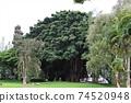 我去了夏威夷大島的Liliuokalani公園 74520948